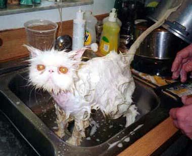 Návody na kočku