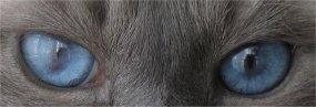 """Obrázek """"http://www.birma.cz/oci6.jpg"""" nelze zobrazit, protože obsahuje chyby."""
